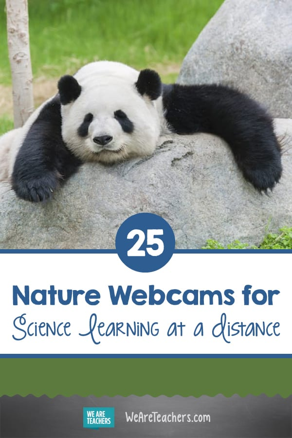 25 Nature Webcams for Science Learning at a Distance