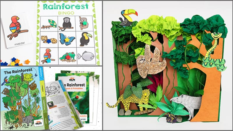 13 Activities To Help Teach Your Students About The Wild And Wonderful  Rainforest - We Are Teachers