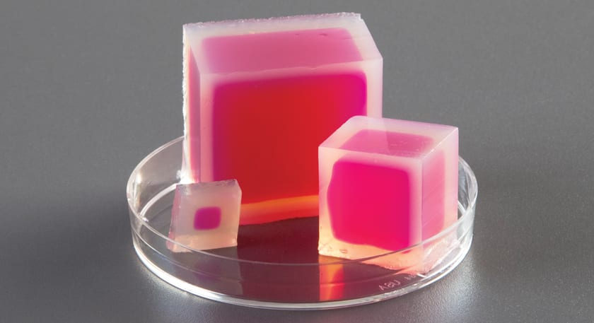 How to teach osmosis and diffusion with agar cubes – a free activity.