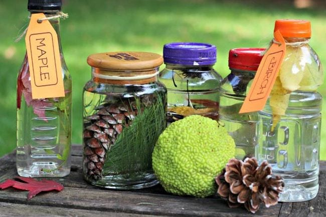 Jars and bottles containing leaves and pinecones with labels identifying types of trees