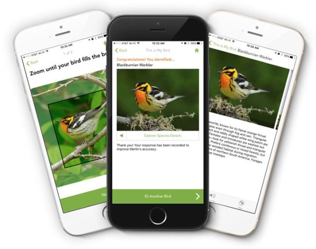 Smartphones showing the Merlin Bird ID app (Outdoor Science)