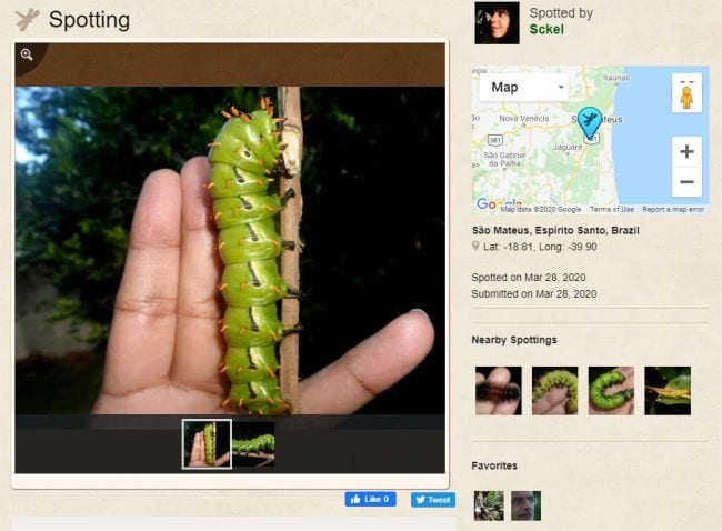 Screen shot of Project Noah site showing a spotting of a Hickory Horned Devil caterpillar (Outdoor Science)