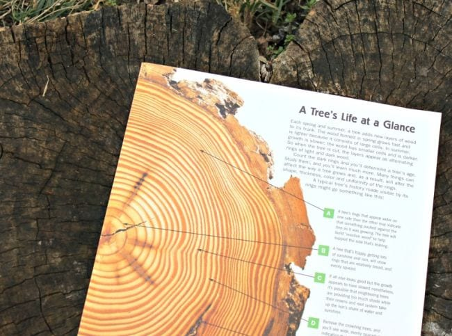 Outside Science Tree Rings Edventures
