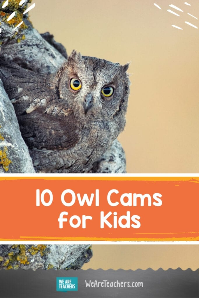 Don't Miss The Best Owl Cams for Kids