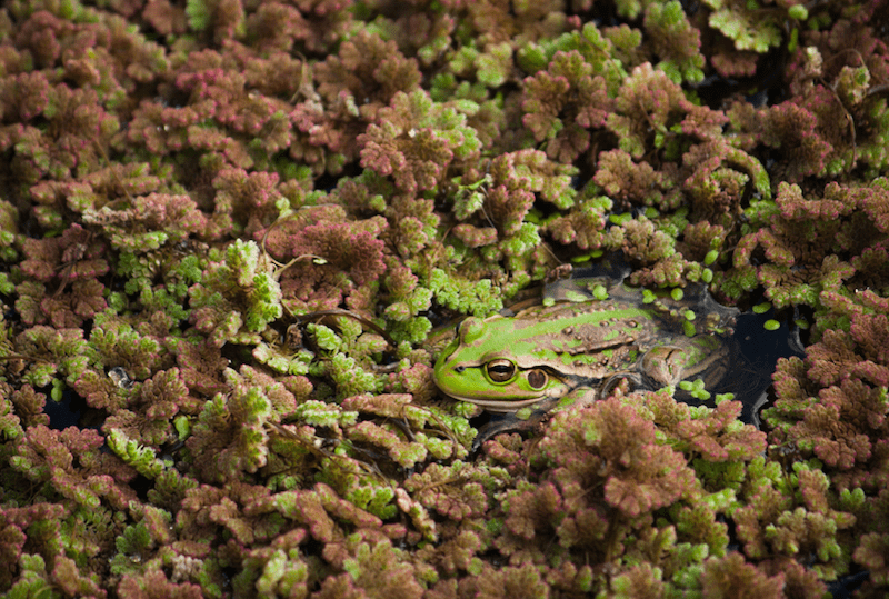 Frog in Camouflage - Earth Day Activities