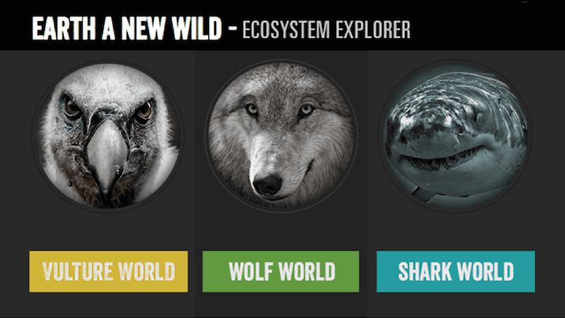Vulture-Wolf-Shark Ecosystems - Earth Day Activities