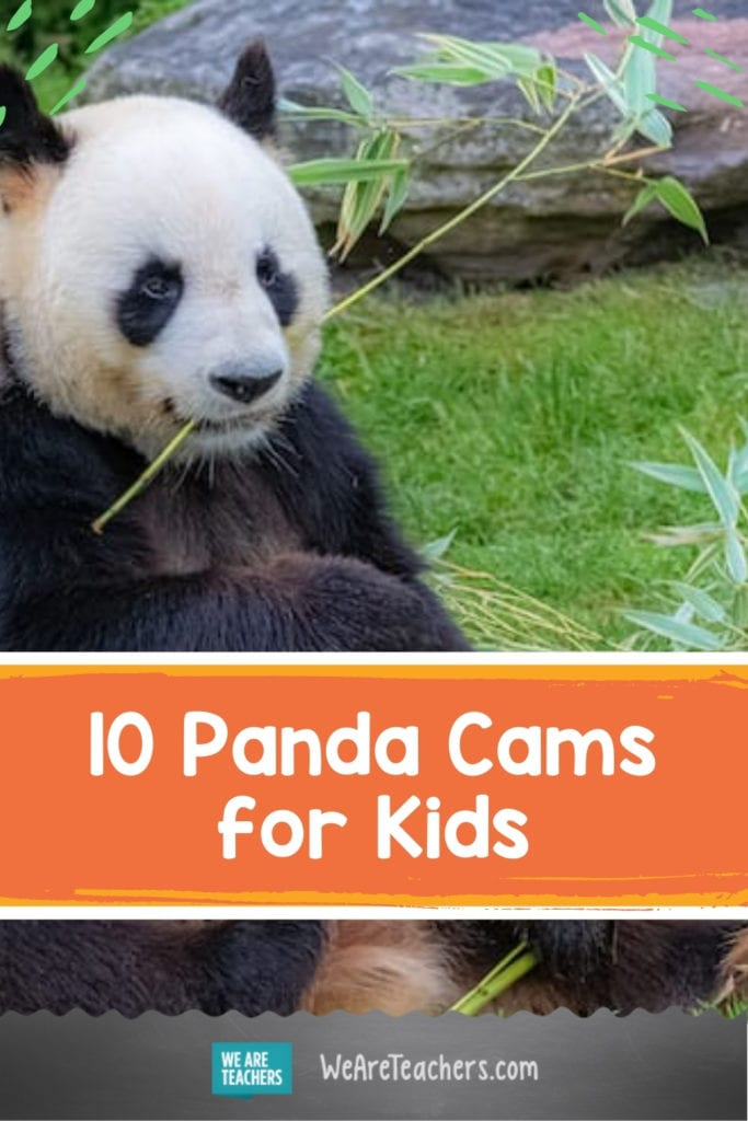 Tune in To Our Favorite Panda Cams for Kids