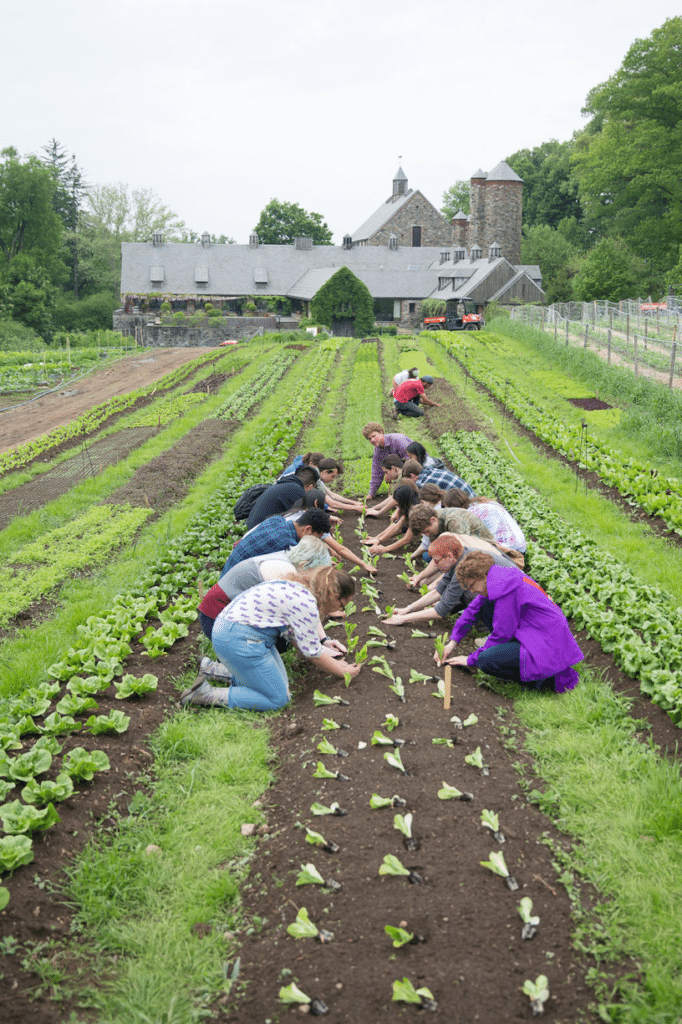 People working in field at Stone Barns – Professional Development for Teachers