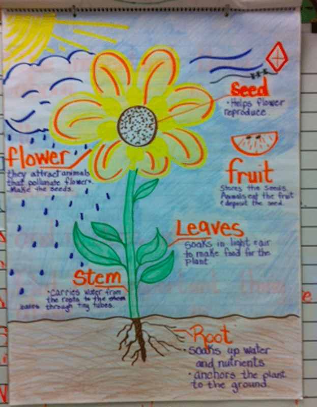 Anchor chart of a flower and its parts.