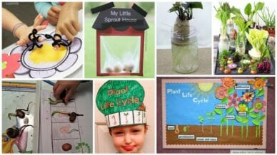 Collage of Plant Life Cycle Activities