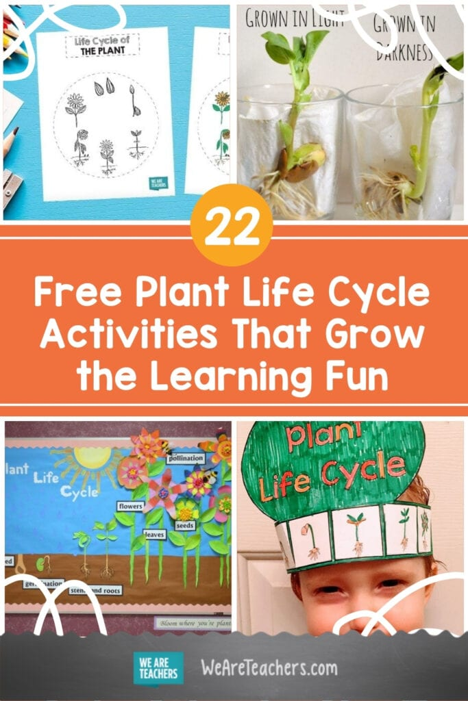 22 Free Plant Life Cycle Activities That Grow the Learning Fun
