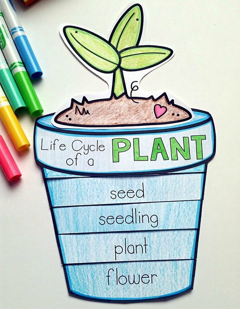 13 Creative Ways To Teach Plant Life Cycle Weareteachers Seed Germination Diagram Of Related Keywords Flip Art