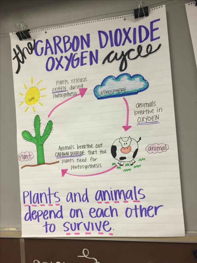 13 Creative Ways To Teach Plant Life Cycle Weareteachers Seed Germination Diagram For Kids This Anchor Chart Takes The Concept One Step Further Showing How Plants And Animals Depend On Another Survival
