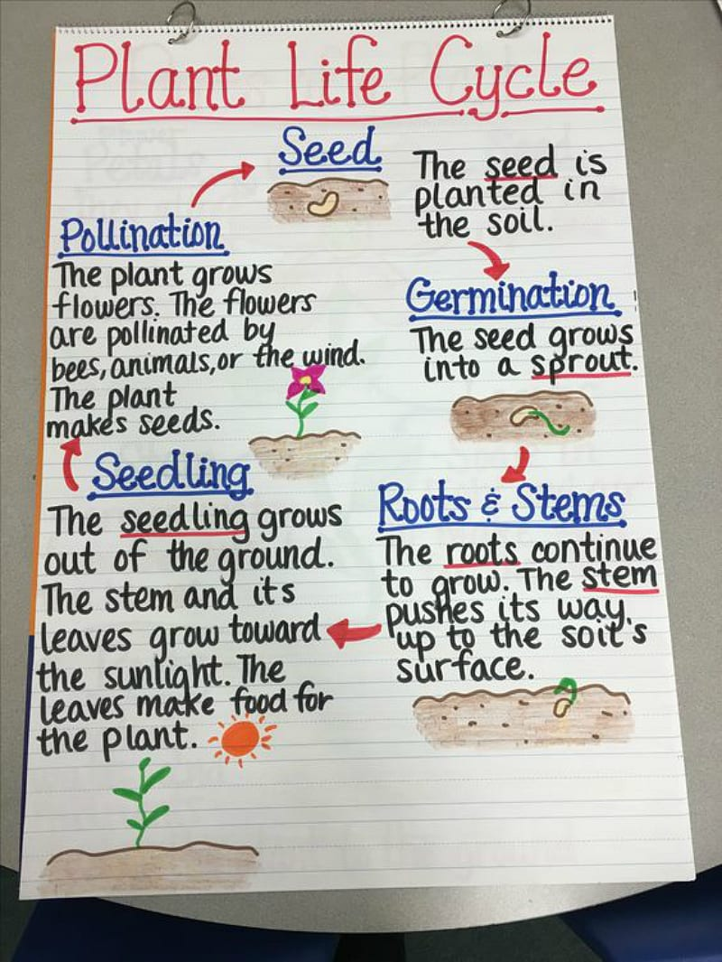 13 creative ways to teach plant life cycle