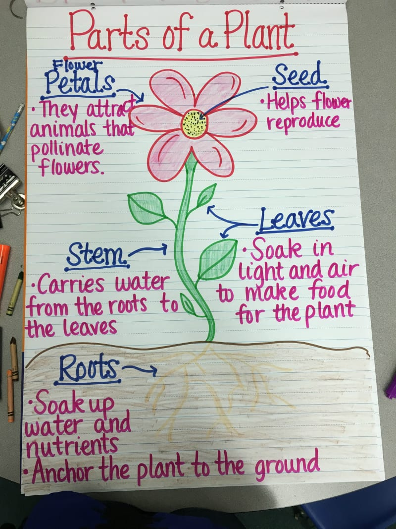 13 creative ways to teach plant life cycle weareteachers