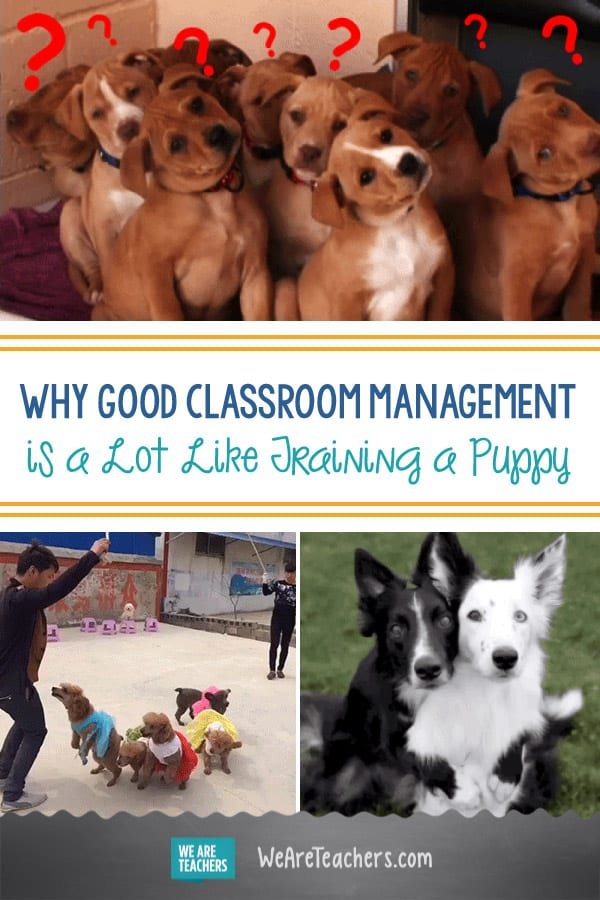 Why Good Classroom Management is a Lot Like Training a Puppy