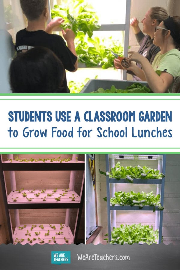 How My Students Use a Classroom Garden to Grow Food for School Lunches