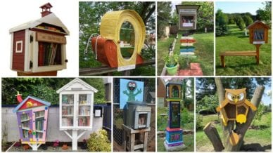 School Little Free Library Featured
