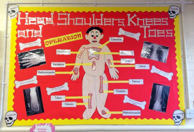 Science Bulletin Boards Operation Pinterest