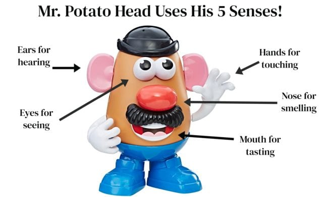 Image of Mr. Potato Head toy with parts labeled with senses like Ears for hearing, Eyes for seeing
