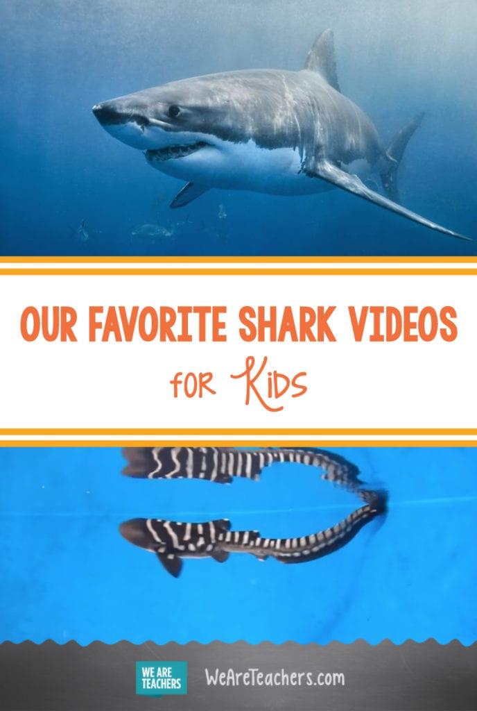 Our Favorite Shark Videos for Kids
