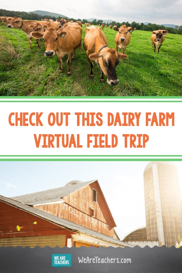 Check Out This Dairy Farm Virtual Field Trip
