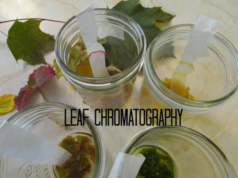 12 Leaf Projects