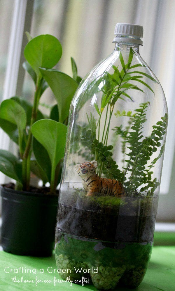 recycled soda bottle terrarium