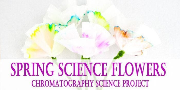 Coffee filter flowers dyed different colors with text reading Spring Science Flowers Chromatography Science Project