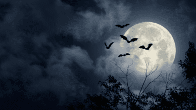 Picture of a creepy nightime sky with a large full moon and three black bats flying in front of it