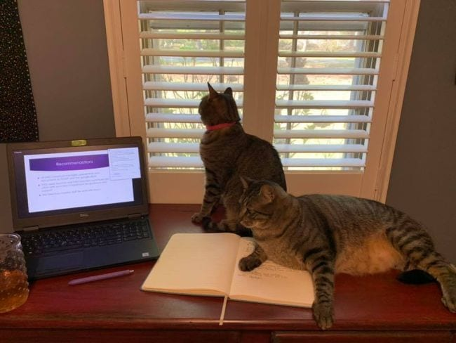 Two cats lounging on table alongside laptop and notebook