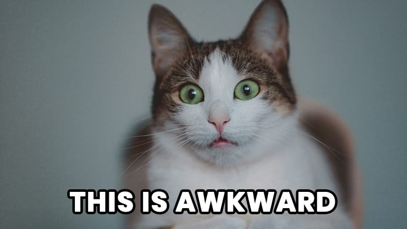 """A cat with large green eyes with an awkward face saying, """"This is Awkward."""""""