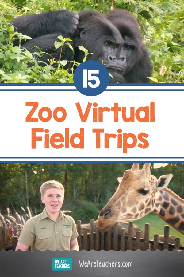 15 Zoo Virtual Field Trips That Will Bring You Up Close With Pandas, Giraffes, and More