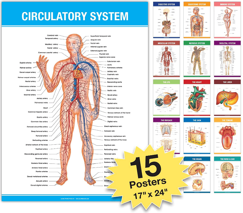 Graphic representing 15 different scientific anatomy posters including the circulatory system, immune system, skeleton, heart, and more.