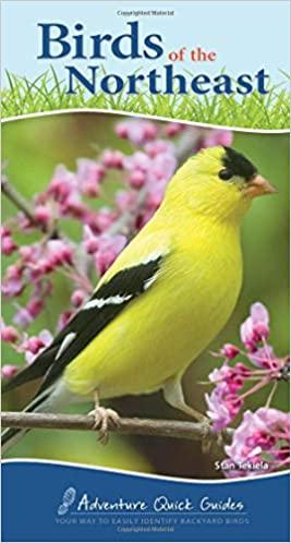 Birding for Kids - 19 Easy Ways to Get Kids into Birding