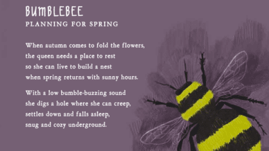 Bumblee Poem by David Harrison -- incorporating science and poetry