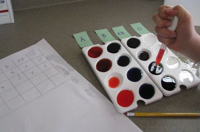 Child mixing food coloring in paint trays with a chart of blood types (Circulatory System Activities)