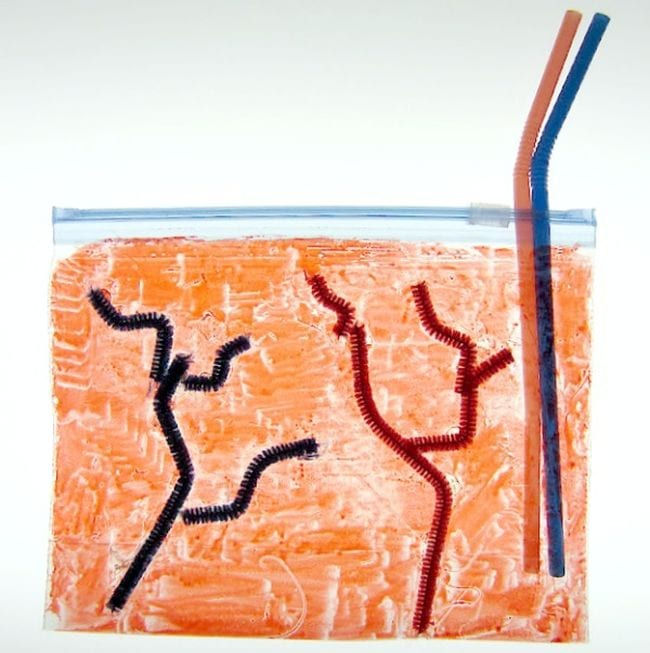 Plastic bag colored red, with veins and arteries made from pipe cleaners and plastic straws (Circulatory System Activities)