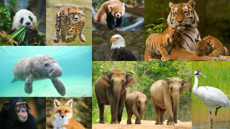 endangered species knowledge quiz test what you know
