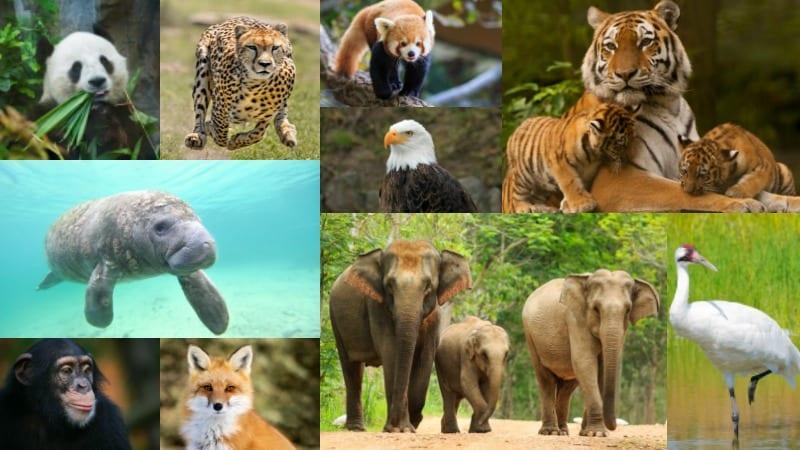 endangered species knowledge