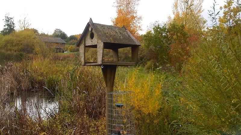 songbird habitat