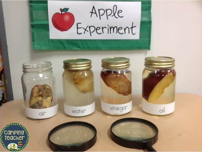 Four jars with apple slice in each, filled with air, water, vinegar, and oil, with two magnifying glasses