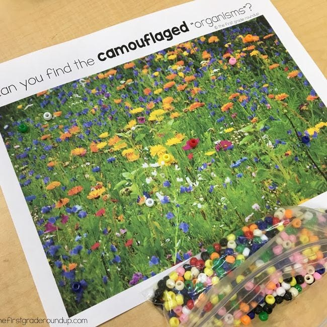 Printed picture of a wildflower meadow with colored beads laid on top