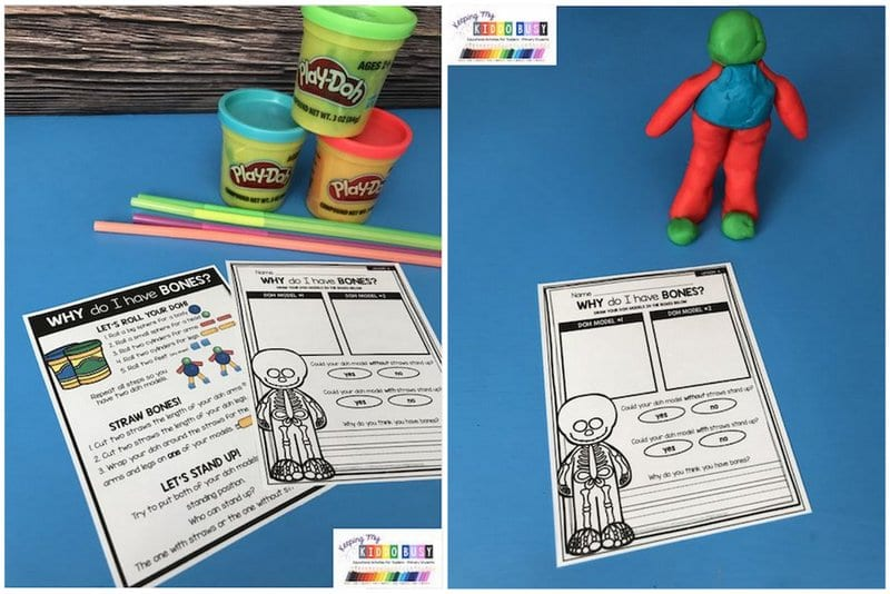 Worksheet entitled Why Do I Have Bones with Play-Doh, drinking straws, and simple model of human figure (First Grade Science)