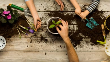 Classroom Gardening Ideas for Hands-on Learning