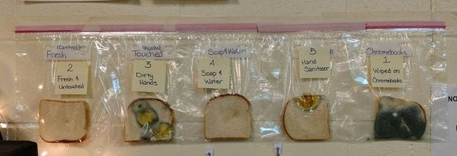 Pieces of bread in individual zipper bags, each with some bacteria growing on them