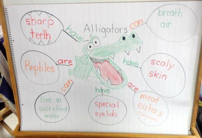 Web graphic organizer for an alligator