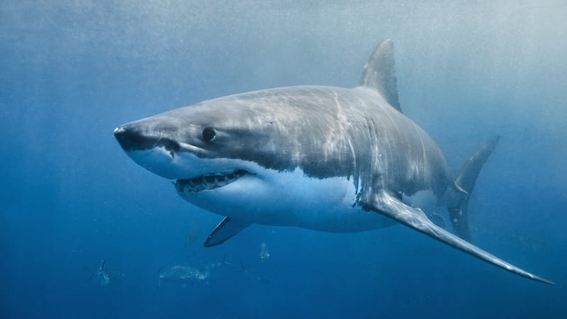 Check Out Our Favorite Educational Shark Videos for Kids