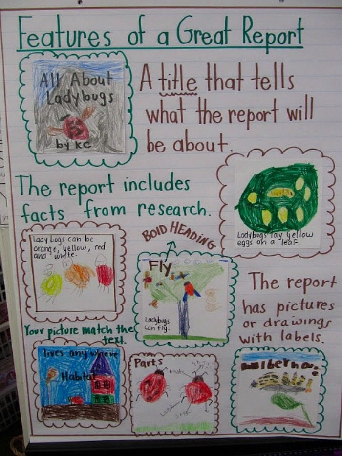 Features of a great report anchor chart showing student report on ladybugs