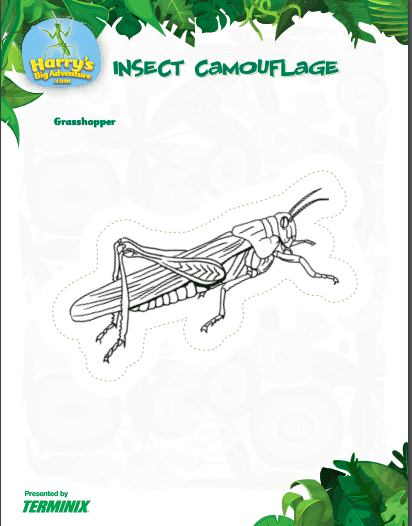 insect activities: camouflage coloring c